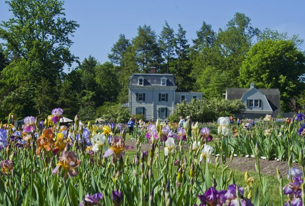 See the stunning collection of irises at Presby Memorial Iris Gardens