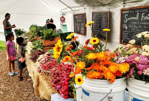 Visit the seasonal farm at the Queens County Farm Museum for fruit, vegetables, and flowers in a rainbow of colors.