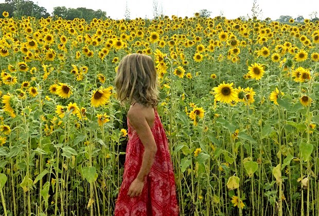 a girl in a sunflower field Gorgeous Sunflower Fields for Pick-Your-Own Flowers near Chicago