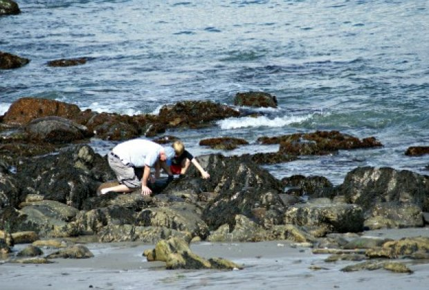 Tide Pooling For Sealife Along Southern Maine S Rocky Coast