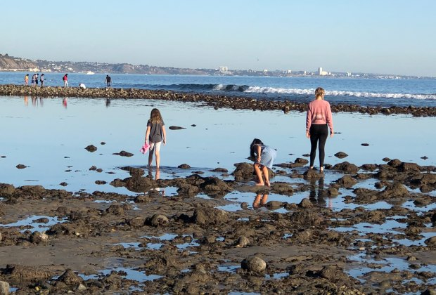 Malibu tide pools are a great place to find hermit crabs and sea urchins.