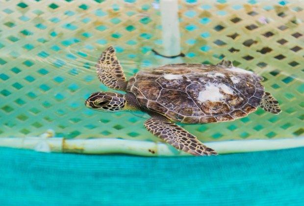 Georgia Sea Turtle Center.