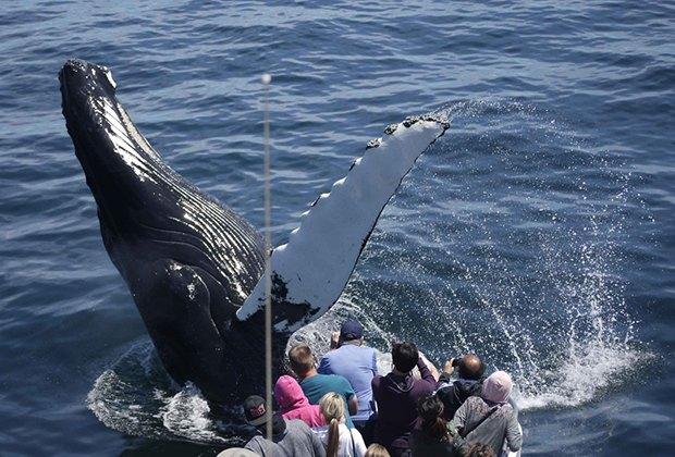 Boston Boat Rides That Kids Love Codzilla Duck Boats Whale