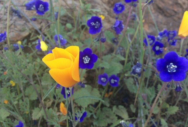 Spring Wildflower Hikes: Find wildflowers on any hike!