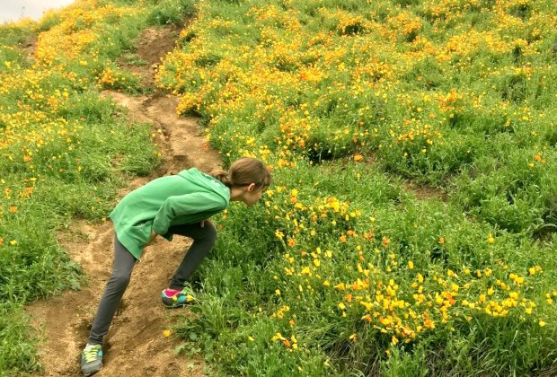 Spring Wildflower Hikes: Rain makes flowers appear practically overnight