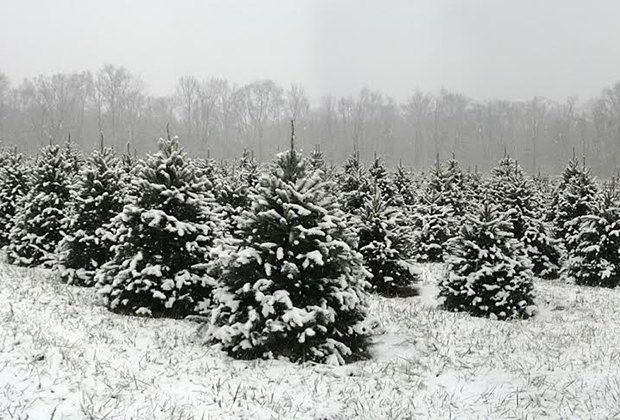 Cut Your Own Christmas Tree Farms in New Jersey | Mommy ...