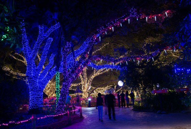 Christmas Light Displays.Best Public Holiday Light Displays In Houston Mommypoppins