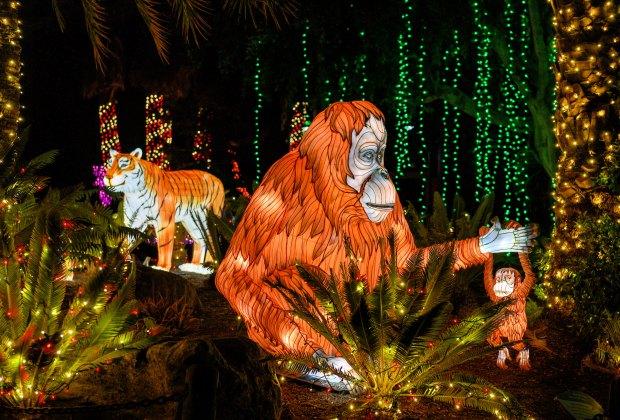 Secrets of the LA Zoo: LA Zoo Lights