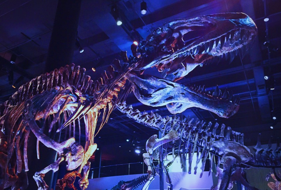 Days And Times For Free Admission To Houston S Museums