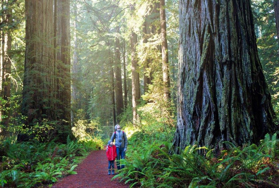 Redwood National Park Photo Via Bigstock
