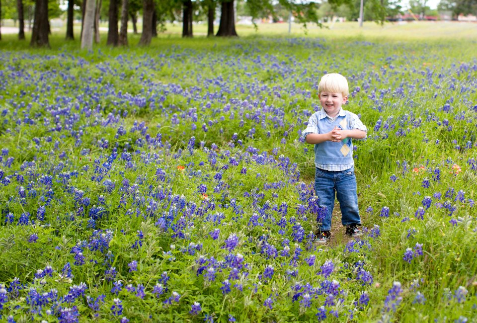Where to find bluebonnets in houston this spring mommypoppins where to find bluebonnets in houston this spring mightylinksfo