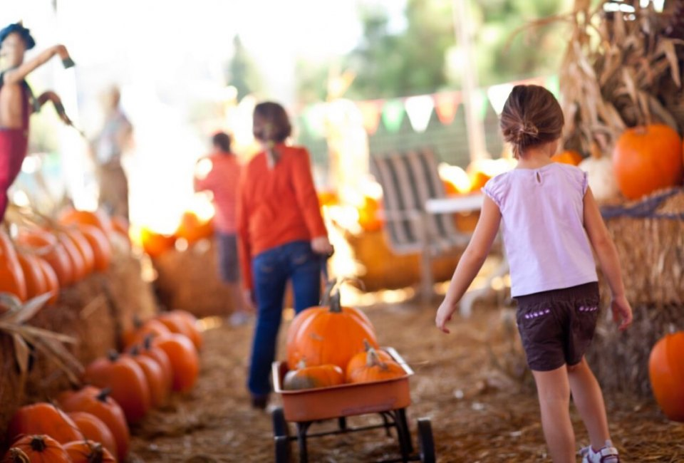 Pumpkin Fest At Cornelius Nursery