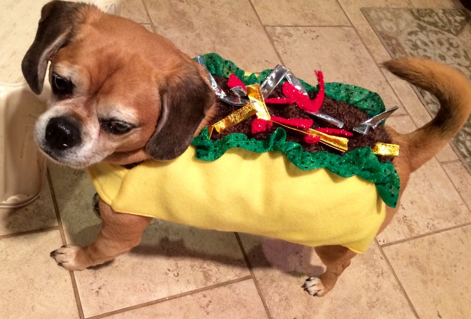 Halloween Events for Long Island Pets | MommyPoppins - Things to do