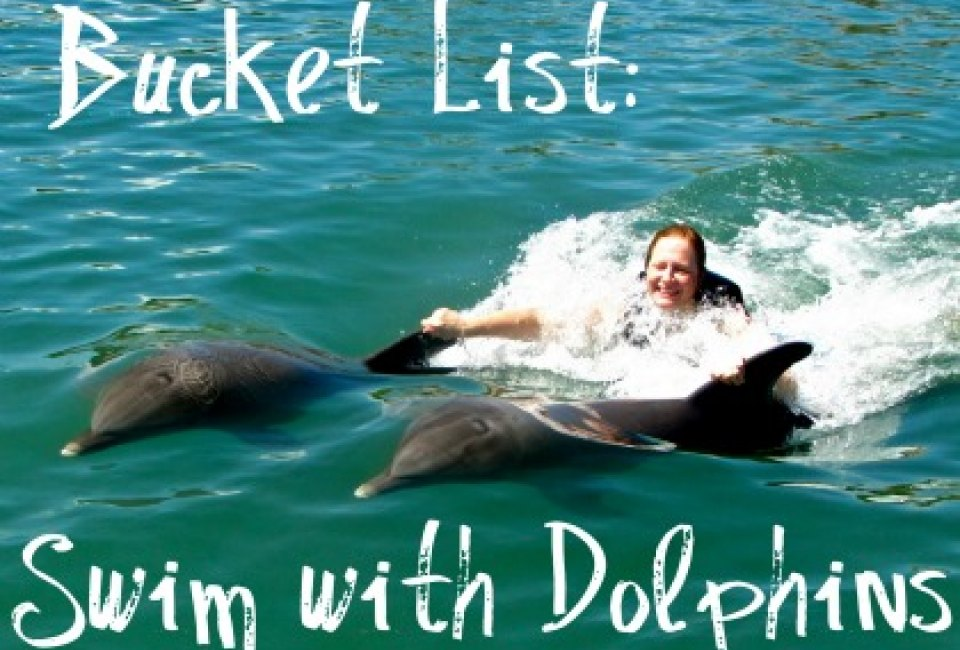 best swim with dolphins dolphin cove jamaica mommypoppins