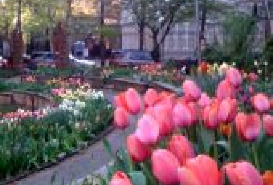 Spring flowers in bloom visit new york citys gardens spring flowers in bloom visit new york citys gardens mightylinksfo Choice Image