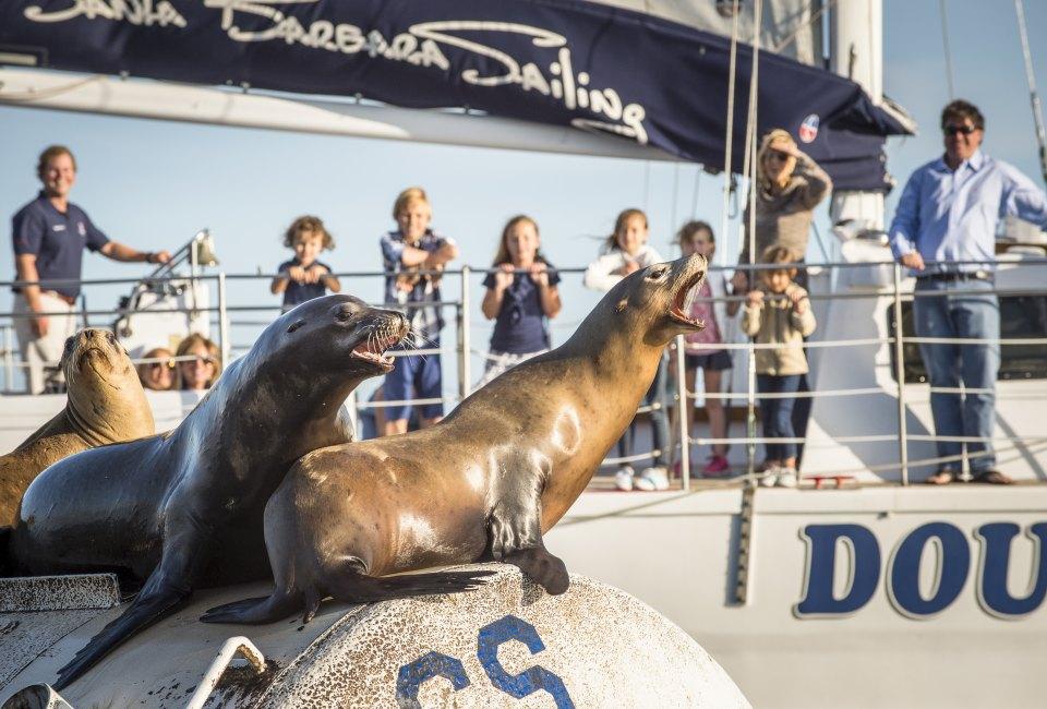 Take A Harbor Cruise And Meet The Locals Photo Courtesy Of Santa Barbara Sailing