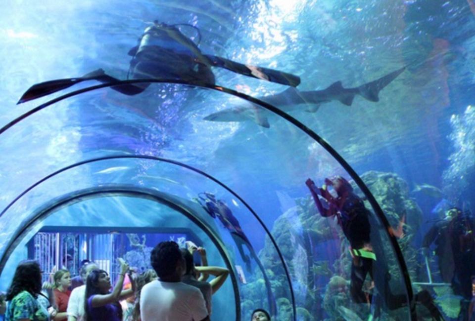 Mommy Wednesdays at Moody Gardens MommyPoppins Things to do in