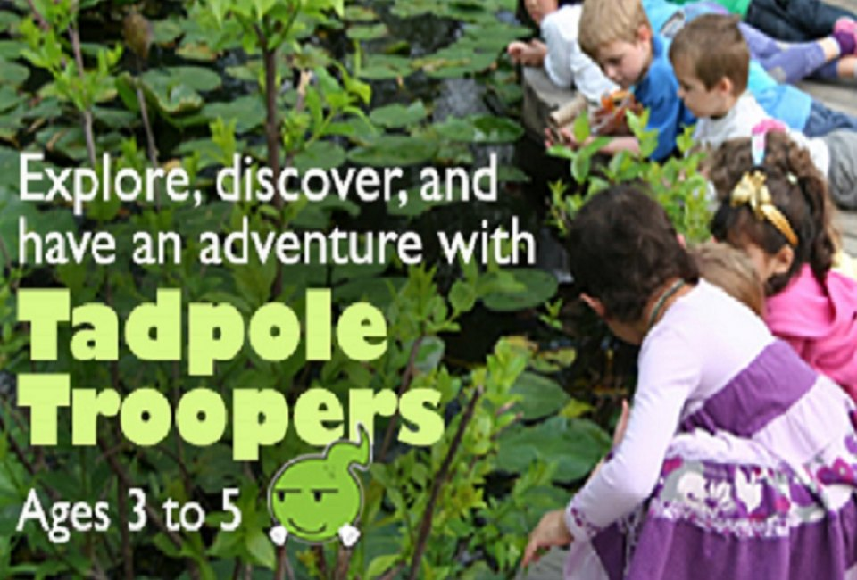 Tadpole Troopers at Houston Arboretum & Nature Center | MommyPoppins ...