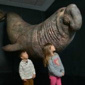 Things to do with kids: Life at the Limits: the American Museum of Natural History's Extreme Animals Exhibit