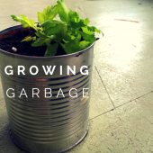 Things to do with kids: Growing Celery and 10 Other Kitchen Scraps You Can Plant