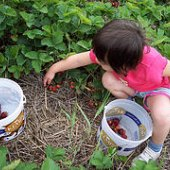 Things to do with kids: This Week: Strawberry Picking, Spring Fests and Mother's Day Wine Trail Weekend