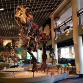 Things to do with kids: The Academy of Natural Sciences in Philadelphia: A Parent's Review