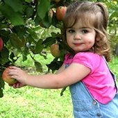 Things to do with kids: Apple Picking Orchards in the New Haven Area