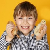 Things to do with kids: Bunny & Chick Photo Shoots at Big Apple Portraits: Springtime & Easter Photos