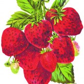 Strawberry Festival At Gregory School