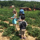 Things to do with kids: Weekend Fun for NJ Kids: Blueberry Festival, Fairy Day, Baseball, June 27-28