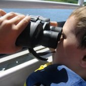 Things to do with kids: Bird Watching with Kids in Newburyport