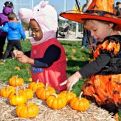 Things to do with kids: 24 NYC Harvest Festivals with Pumpkin Patches, Hayrides and Fall Crafts