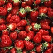 Things to do with kids: Strawberry Picking with Kids: Pick-Your-Own Strawberry Farms in Lower Hudson Valley