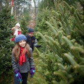 Things to do with kids: Where to Cut Your Own Christmas Tree Near Boston