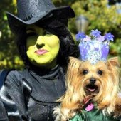 Things to do with kids: Halloween Goes to the Dogs: NYC Dog Costume Parades & Contests