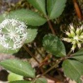 Earth Day Wildflower Ramble