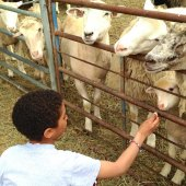 Things to do with kids: The Inn at East Hill Farm: A Blissful Family Farm Vacation in New Hampshire