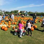 Things to do with kids: 20 Fun Things to do this Fall with Long Island Kids