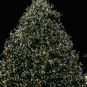 Things to do with kids: Christmas Tree Lighting Ceremonies in Boston