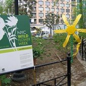 Things to do with kids: Wildflower Week in NYC - May 1 - 9, 2010
