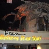 Things to do with kids: New Extreme Sleepovers at Ripley's Believe it or Not! Odditorium Museum