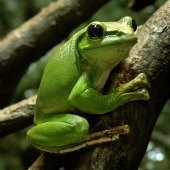 Things to do with kids: Frogs at the American Museum of Natural History: A Hoppin' Exhibit
