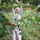 Things to do with kids: Pick-Your-Own Apple Orchards this Autumn in Connecticut (Eastern CT)
