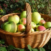 Things to do with kids: Apple Picking with Kids in Orange and Dutchess Counties