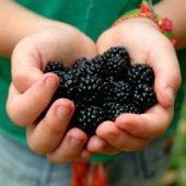 Things to do with kids: Pick-Your-Own Berry Farms in Connecticut