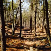 Things to do with kids: 5 Outdoor and Nature April Vacation Week Camps for Boston Kids