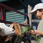 Things to do with kids: Stay on a Farm: Family Farm Vacations in the Catskills