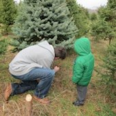 Things to do with kids: More Cut-Your-Own Christmas Tree Farms in Fairfield County, CT
