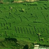 Things to do with kids: Corn and Hay Mazes in the Hartford Area