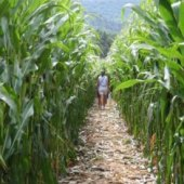 Things to do with kids: Corn Mazes (and Haunted Mazes) for LA & Orange County Kids
